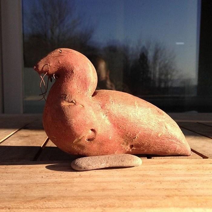 【食べ物おもしろ画像】オットセイみたいな形のおもしろい芋(笑)