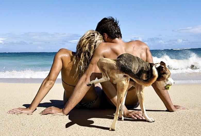 【海とカップルと犬おもしろ画像】海でまったりするカップル、背後の犬に気付かない(笑)
