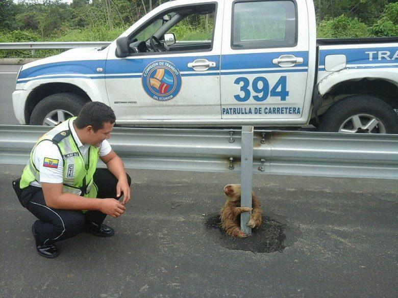 海外で道路沿いのガードレールにしがみつくナマケモノ(笑)