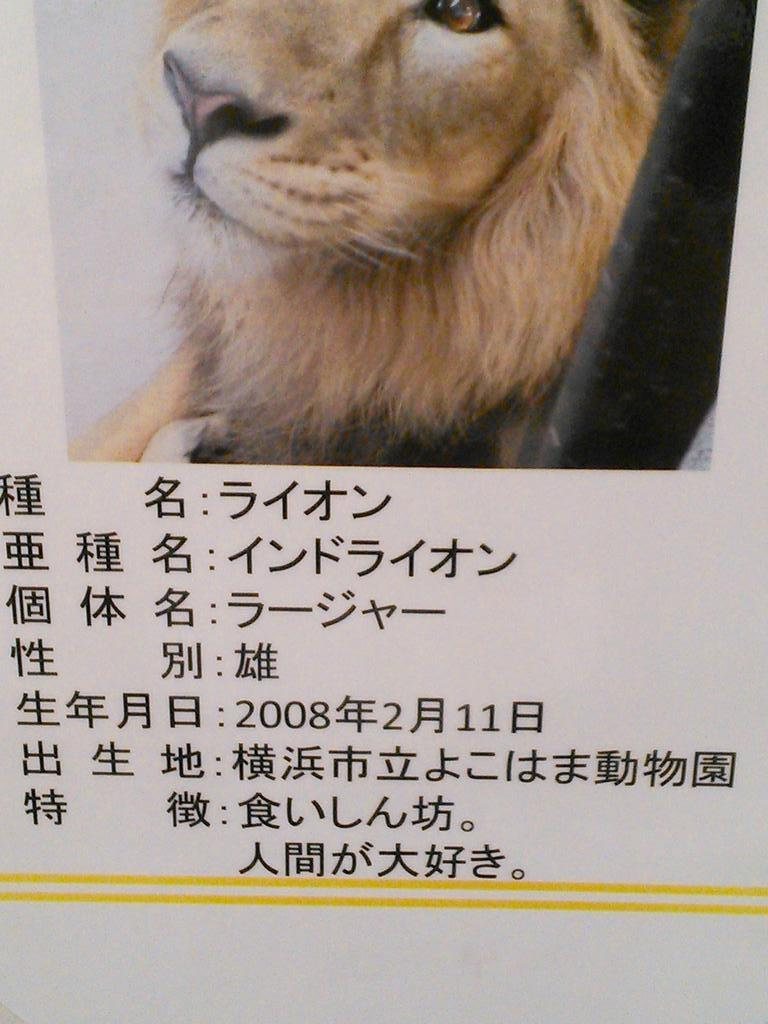 【張り紙おもしろ画像】よこはま動物園のライオンの説明文が怖い(笑)