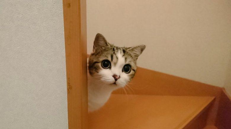 【猫おもしろ画像】「呼んだ?」みたいな顔してのぞく猫(笑)