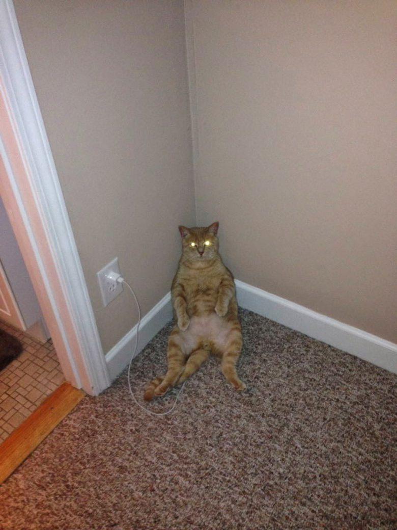 【猫おもしろ画像】充電して目が光るおもしろい猫(笑)