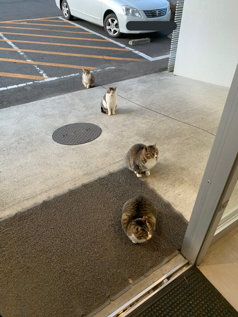 一定の距離を保つ猫たちがコマ撮りみたいでおもしろい(笑)