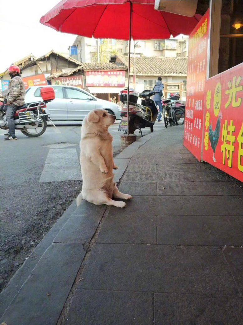 【犬おもしろ画像】中華街でお行儀よく座って餌を待つおもしろい犬(笑)