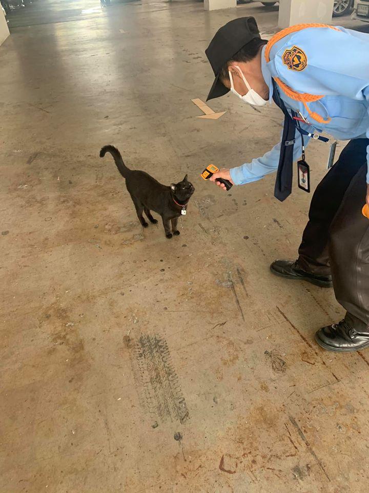 【コロナ禍の猫おもしろ画像】新型コロナウイルスの影響で発熱検査を受ける猫(笑)
