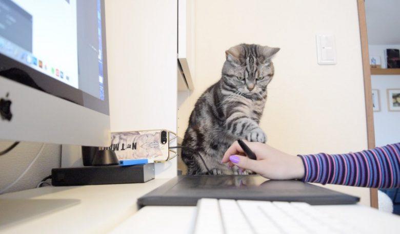 テレワーク中の猫こまちさん面白画像