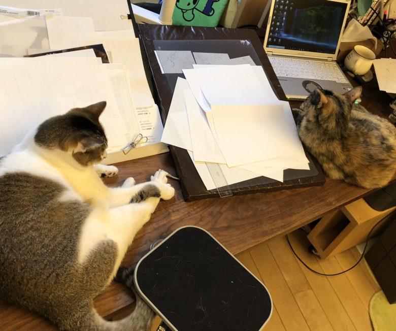 【在宅ワーク猫おもしろ画像】全然仕事が進まない在宅ワークの光景(笑)