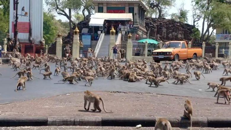 【コロナ禍の猿おもしろ画像】新型コロナのせいで餌がもらえずタイの街で暴れまわる猿たち!