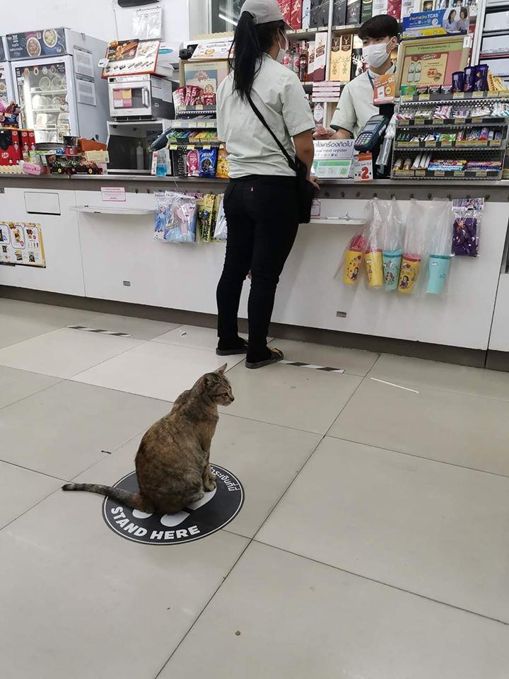 【ソーシャルディスタンス猫おもしろ画像】ソーシャルディスタンスを保つ賢い猫(笑)