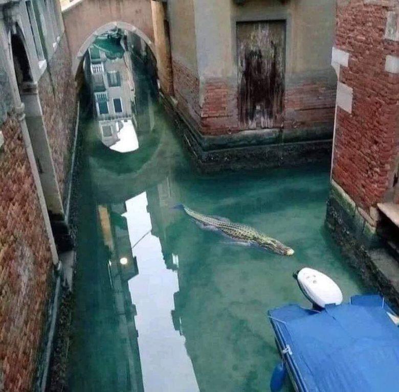【コロナ禍ベネチア運河のワニおもしろ画像】ロックダウンで人が減ってベネチアの運河にワニが現れる(笑)