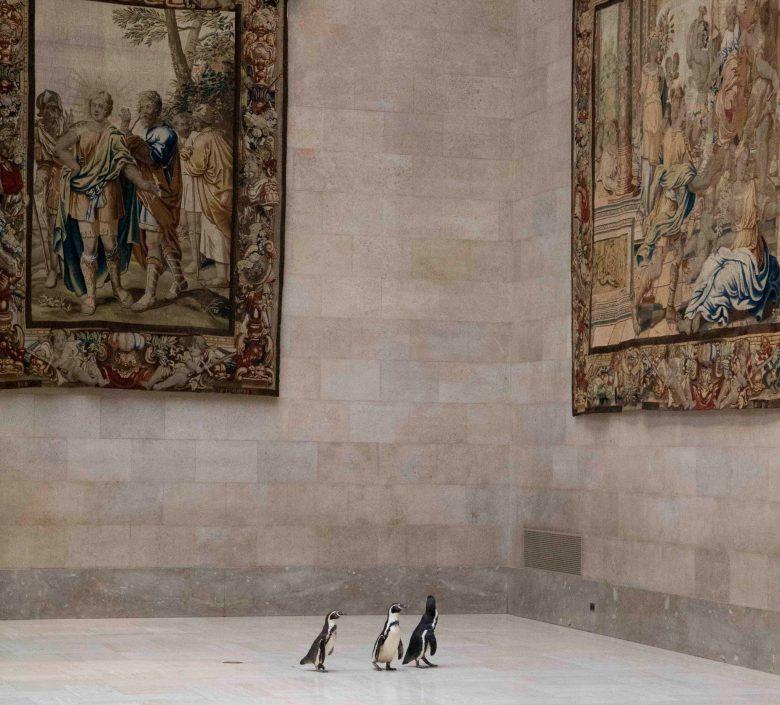 【コロナで起きたおもしろ画像】コロナで閉館中の美術館でアート鑑賞するペンギンたち(笑)