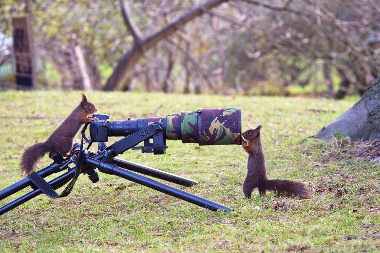 写真家のカメラを使って撮影を始める赤リスたち(笑)