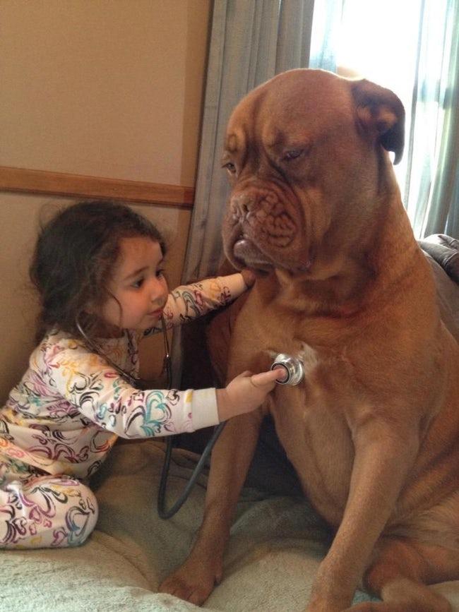【犬と赤ちゃんおもしろ画像】大きな犬を聴診器で診察する赤ちゃんがかわいい(笑)