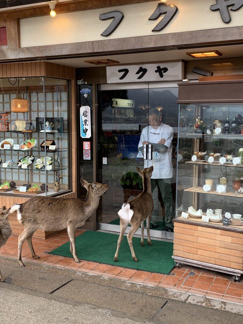 【鹿おもしろ画像】宮島の食堂「お食事処フクヤ」への入店を断られるシカたち(笑)