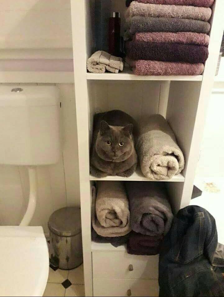 【猫おもしろ画像】タオルのふりをする猫の様子がおもしろい(笑)