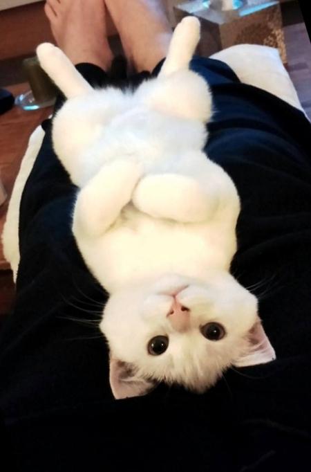【猫おもしろ画像】膝の上で腕組みするドヤ顔の猫(笑)