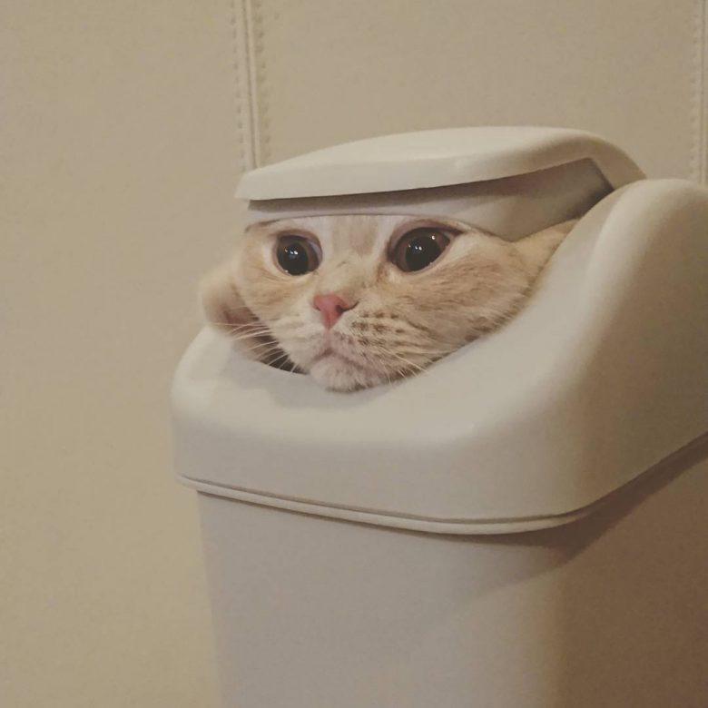 【猫おもしろ画像】ゴミ箱に入る猫のおもしろい顔(笑)