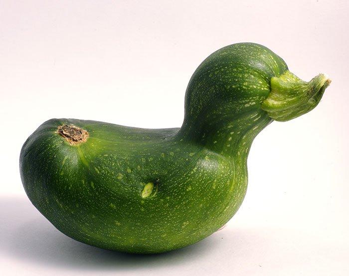 【変わった形の野菜おもしろ画像】アヒルみたいな形のズッキーニ(笑)