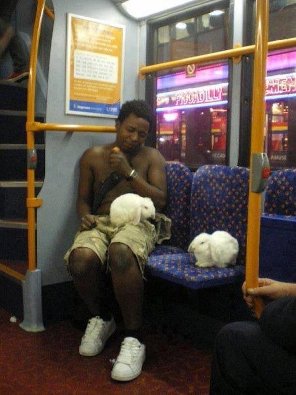 海外でバスにうさぎを連れてくる人(笑)