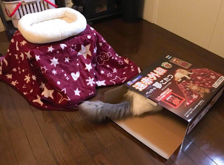 【猫おもしろ画像】猫用こたつの中身じゃなく箱を気に入る猫(笑)