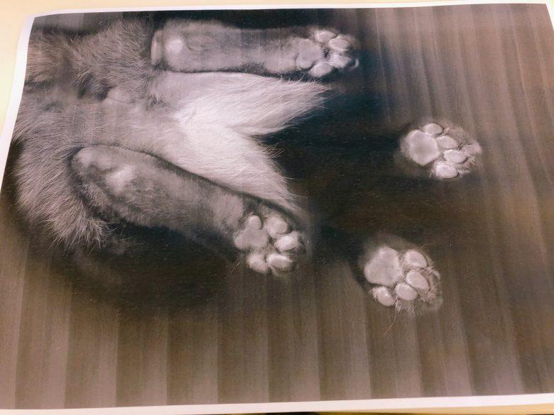 【テレワークと猫おもしろ画像】テレワーク中にプリンタを占拠した猫をそのままコピーしたら(笑)