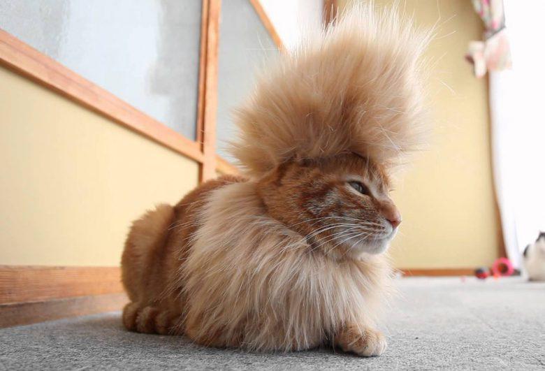 【猫おもしろ画像】イケメンなモヒカン猫(笑)