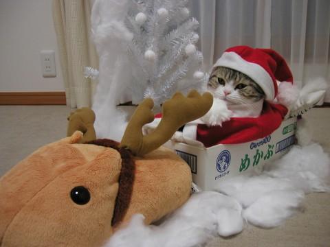 【サンタ猫おもしろ画像】カピバラさんソリに乗るサンタ猫(笑)