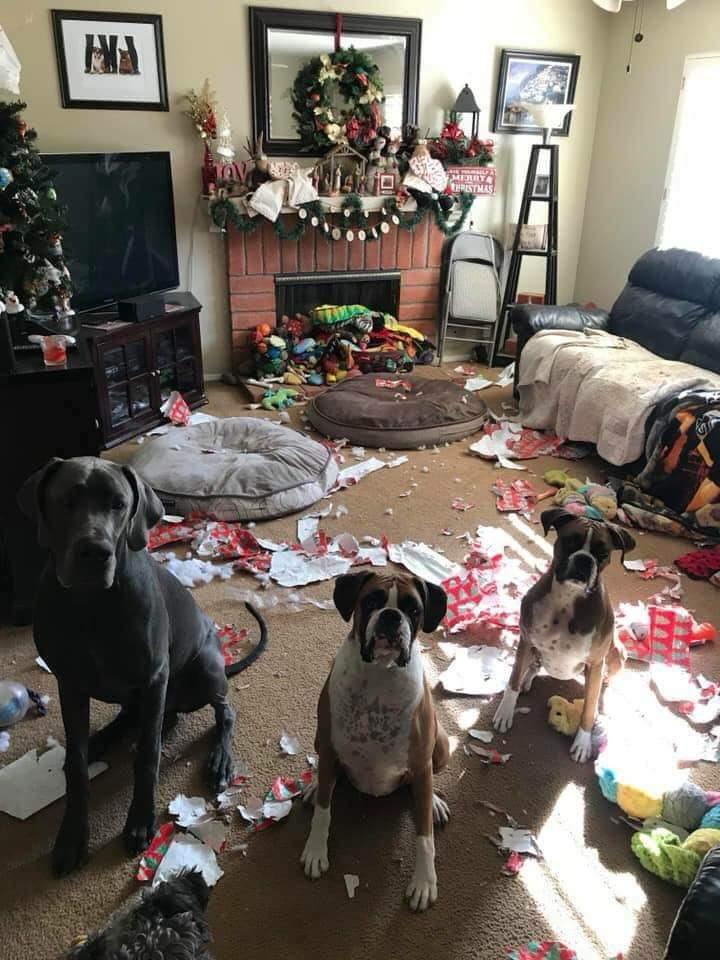【クリスマスの犬おもしろ画像】クリスマスに部屋をぐちゃぐちゃにする犬たち(笑)