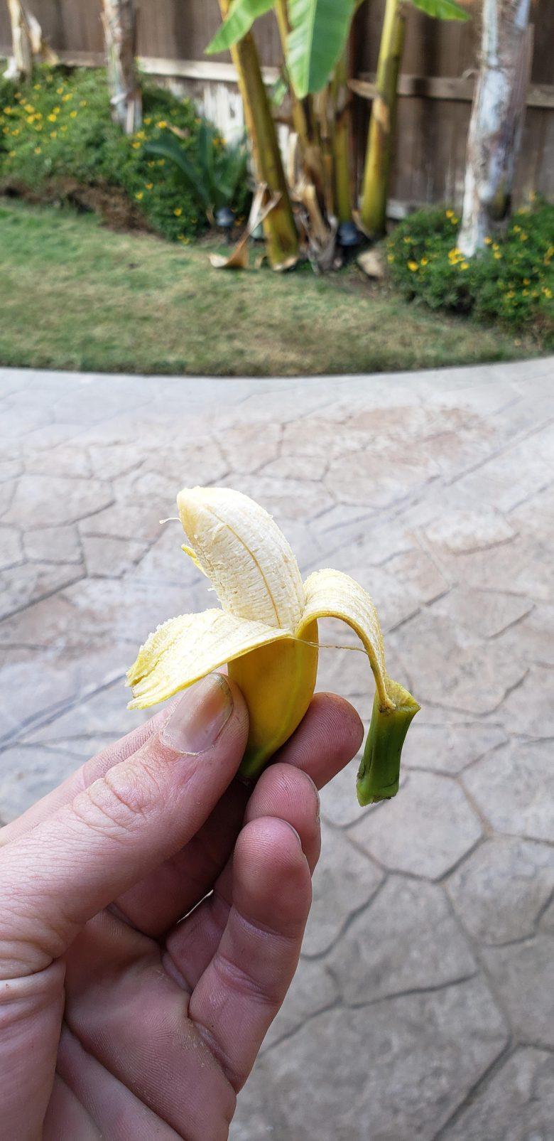 【変わった果物おもしろ画像】庭で育ったすごい小さいバナナ(笑)