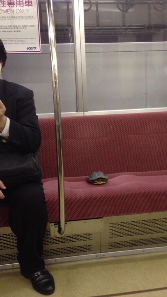 【電車おもしろ画像】京王線に乗車したカメ(笑)