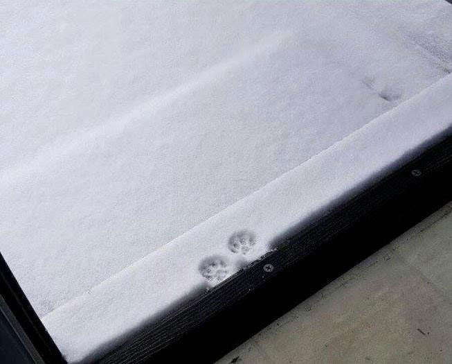 【雪と猫おもしろ画像】雪をちょっと踏んで諦めた猫(笑)