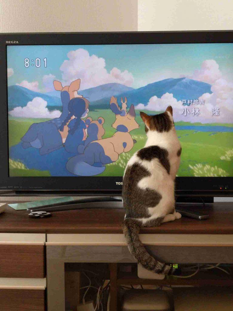 テレビアニメのキャラたちと同じ風景を見る猫(笑)