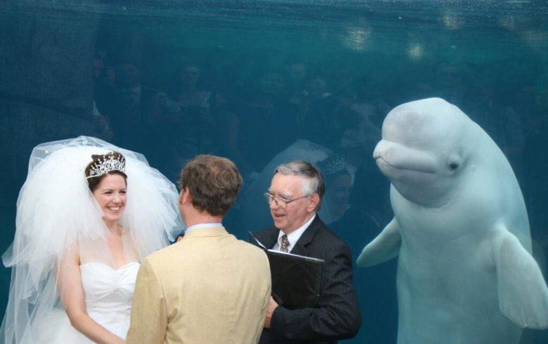 新郎新婦を祝福するシロイルカ(笑)