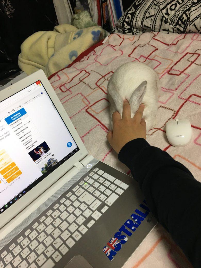 【ウサギおもしろ画像】パソコン作業中にマウスと思って掴んだものがモフモフのうさぎ(笑)