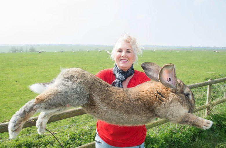 【ウサギおもしろ画像】世界最大級のうさぎ「フレミッシュ・ジャイアント」がすごい(笑)