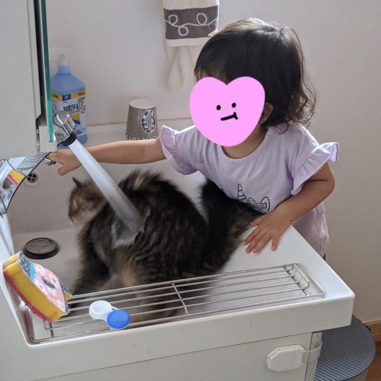 【猫と子どもおもしろ画像】子どもに洗面台の蛇口をひねられて驚く猫(笑)