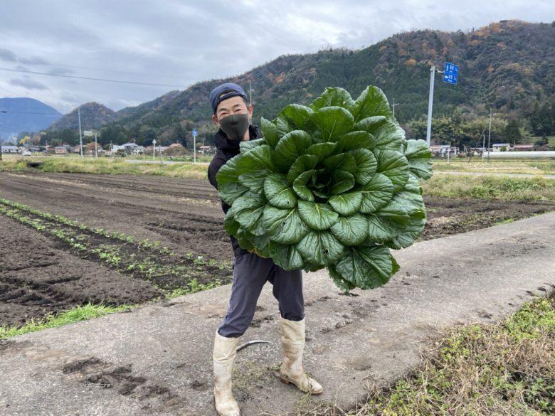 【大きい野菜おもしろ画像】通常の200倍の巨大な小松菜(笑)