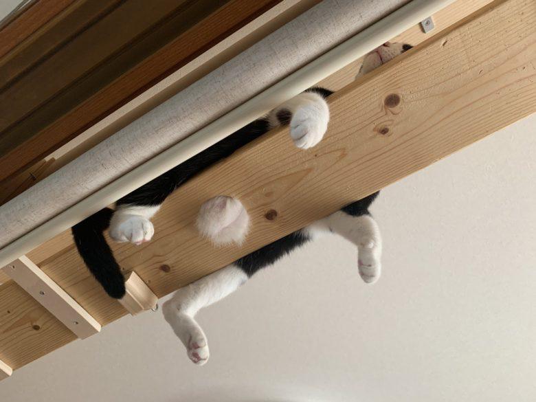 【猫おもしろ画像】板の穴から出べそが飛び出てる猫(笑)