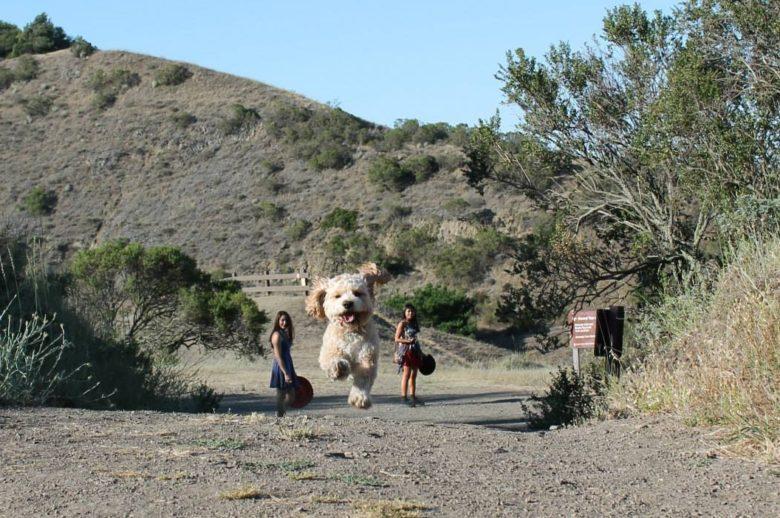 【犬おもしろ画像】遠近法で巨大に見える犬(笑)