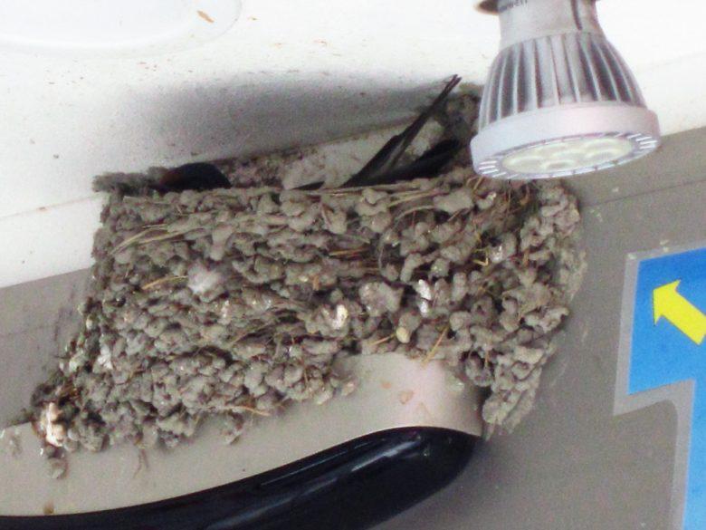 ツバメが不動産屋で見つけた格安物件(笑)
