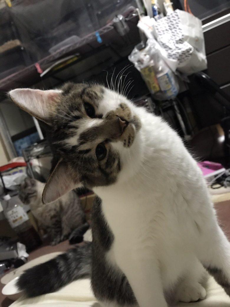 【猫おもしろ画像】消化器噴射で家の中を粉だらけにして、かわいくとぼける猫(笑)