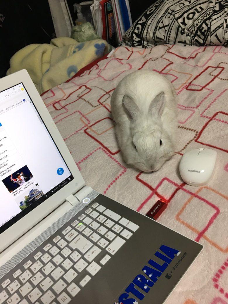 【うさぎおもしろ画像】パソコン作業中にマウスの代わりに掴んだもの(笑)