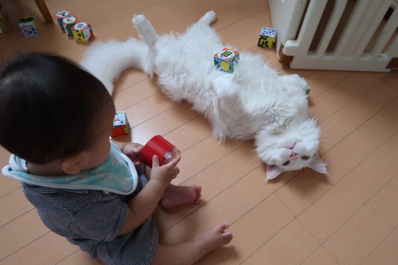 【子どもと猫おもしろ画像】体を張って子どもの遊びに付き合ってくれる優しい猫(笑)