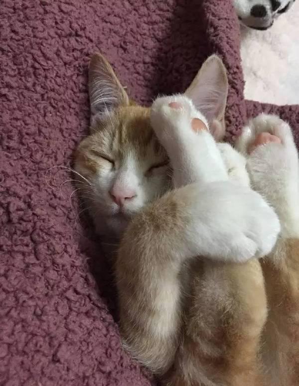 【猫おもしろ画像】恥ずかしいのか、手や足で顔を隠しながら寝る猫(笑)