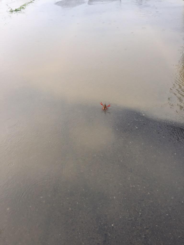 洪水道路にいる赤いモノが気になって近づいてみたら(笑)
