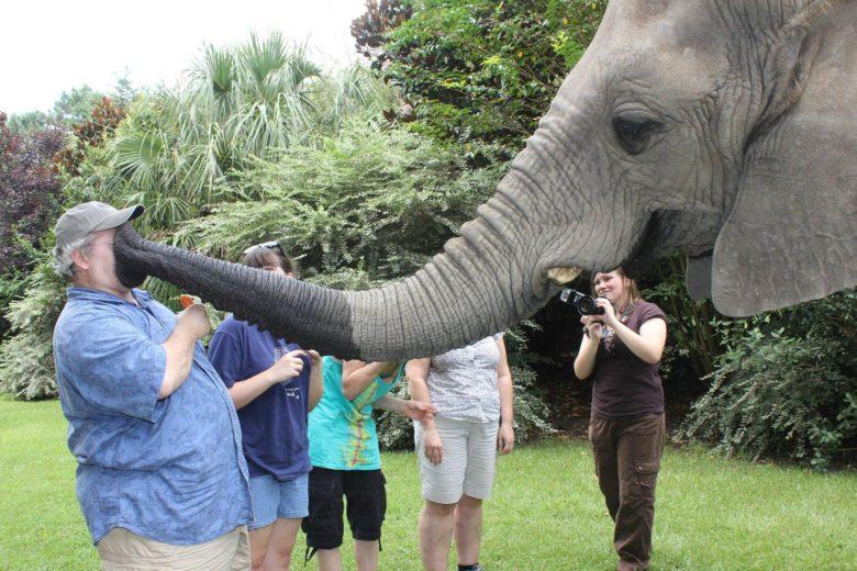 【象おもしろ画像】象に吸われる人(笑)
