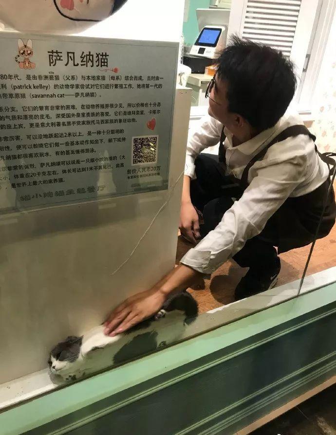 【猫おもしろ画像】猫カフェでお気に入りの隙間から出たくない猫の結末(笑)