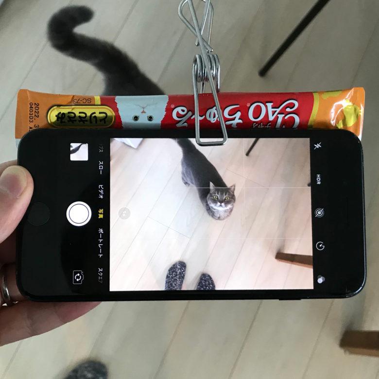 【猫おもしろ画像】スマホ撮影で猫が絶対に目線をくれるCiaoちゅ~るシステム(笑)