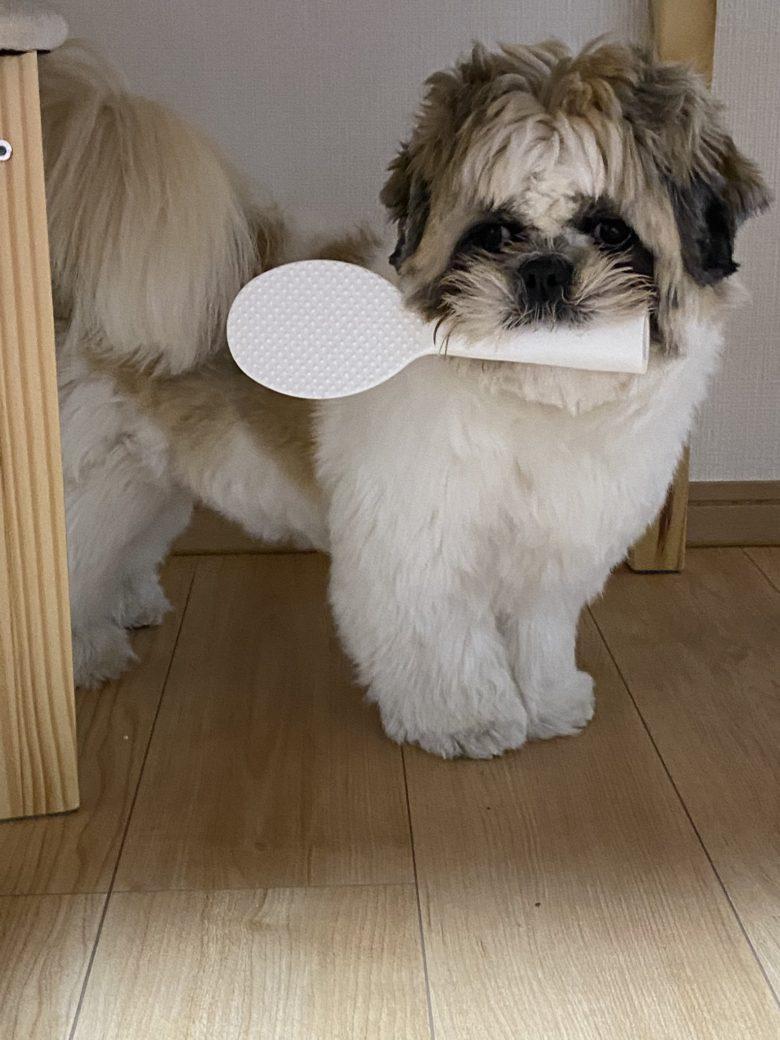【地震と犬おもしろ画像】地震に驚いてしゃもじを咥える犬(笑)