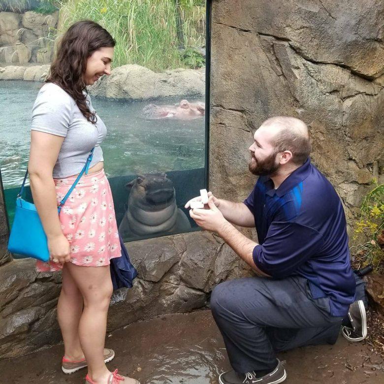 【プロポーズおもしろ画像】動物園でプロポーズするカップルが気になる赤ちゃんカバ(笑)